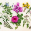 Naturopathic Herbs and Flowers — Stock Photo #55072411
