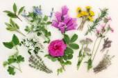 Naturopathic Herbs and Flowers — Stock Photo