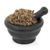 Gentian Herb — Stock Photo