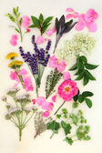 Medicinal Herbs and Flowers — Stock Photo
