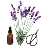 Lavender Herb Essence — Stock Photo