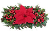 Poinsettia Flower Display — Stock Photo
