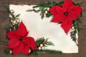 Poinsettia Flowers Border — Stock Photo