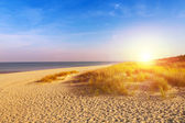Baltic sea sand dunes — Stock Photo