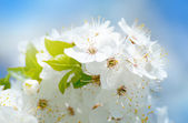 Flower spring background — Stock Photo