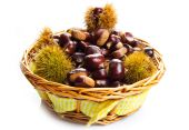 Close up of chestnuts isolated on white background  — Stock Photo