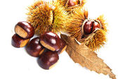 Groups of chestnut nuts on white close up — Stock Photo