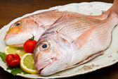 Raw porgy on white dish on wood background — Stock Photo