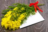 Mimosa, Women's Day — Stock Photo