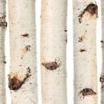 Birch trunks — Stock Photo #54173253