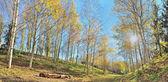 Autumn panorama — Stock Photo