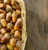 basket full of acorns — Foto de Stock
