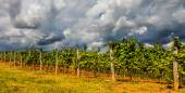 Dramatic Tuscan Landscape — ストック写真