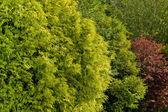 Garden foliage — Stock Photo