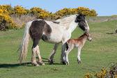 Newborn foal — Stock Photo