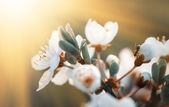 Spring flowers blossom in sunny day — Stock Photo