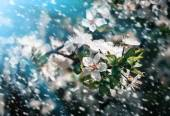 Spring flowers in a rainy day — Stock Photo