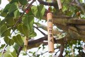 Wishing tree is ngong ping villeage — Stock fotografie