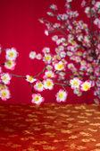 Chinese new year cherry blossom — Stock Photo