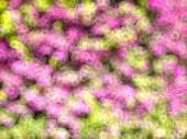 Flowers made with bokeh — Stock Photo