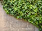 Brickwall in Barcelona — Stock Photo