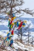 Ribbons on the tree — Stock Photo