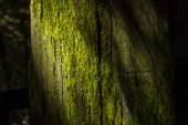Anophyte on the branches of the tree. — Stock Photo