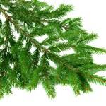 Green fir branch over white — Stock Photo #53324075