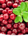 Organic cranberry — Stock Photo