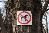 Sign prohibiting dog walking — Stock Photo