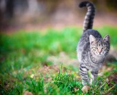 Young cat on grass — Stock Photo