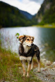 Stray dog near a lake — Stock Photo