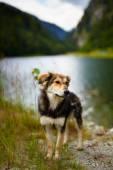 Stray dog near a lake — Stock Photo