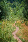 Footpath in the forest — Stock Photo