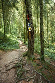 Hiking trail in forest — Stock Photo