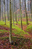 Deciduous forest and fallen leaves — Stockfoto