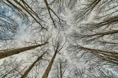 Looking up in forest — Stock Photo