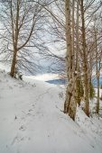 Snowy beech forest — Stock Photo