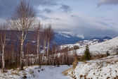 Birch trees on mountain — Stock Photo
