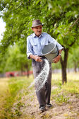 Old farmer spreading fertilizer in orchard — Stock Photo
