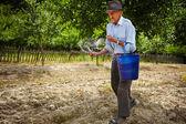 Old farmer spreading fertilizer in orchard — Stock Photo