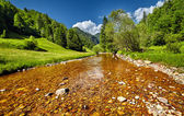 Landscape with river and forests — Stock Photo
