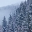 Snow covered fir forest — Stock Photo #65147981