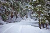 Snowy road in the forest — Stock Photo