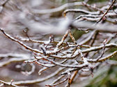 Icy branch on forest background — Stock Photo