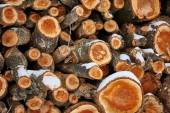 Stack of fire woods — Stock Photo