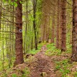 Footpath through a pine forest — Stock Photo #68067159