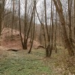 Barren forest and dead leaves after winter — Stock Photo #69599403
