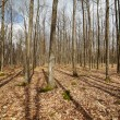 Barren forest and dead leaves after winter — Stock Photo #69600049