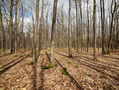 Barren forest and dead leaves after winter — Stock Photo